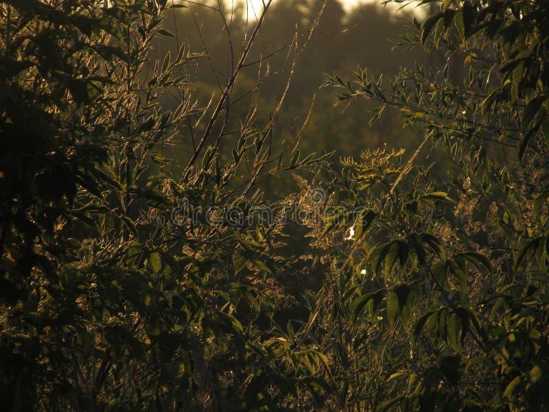 Фантастическое красивое высекло openwork контуры зеленой травы и листвы, загоренные золотым солнцем рассвета стоковое изображение rf
