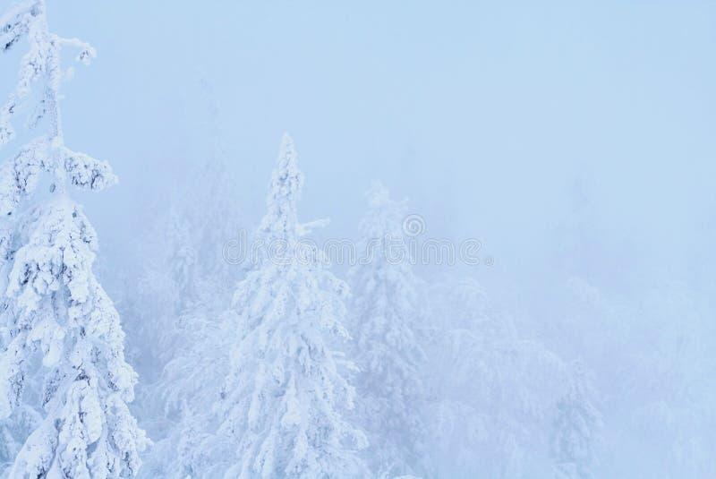 Фантастичный лес на заходе солнца, все зимы рождества покрыт с снегом Деревья сосны и спруса предусматриванные в снеге блицкрига стоковое изображение