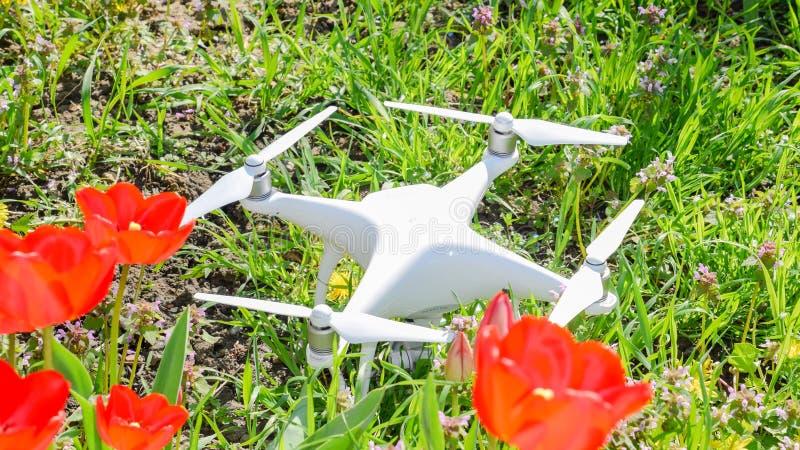 Фантом 4 Quadrocopter DJI расположен на луге с красными цветками тюльпана стоковая фотография rf