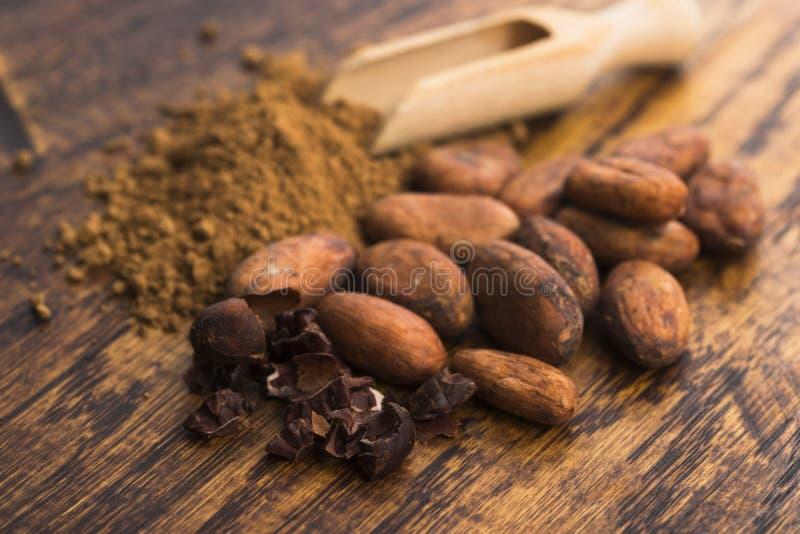Фасоли какао и порошок какао в ложке стоковая фотография rf