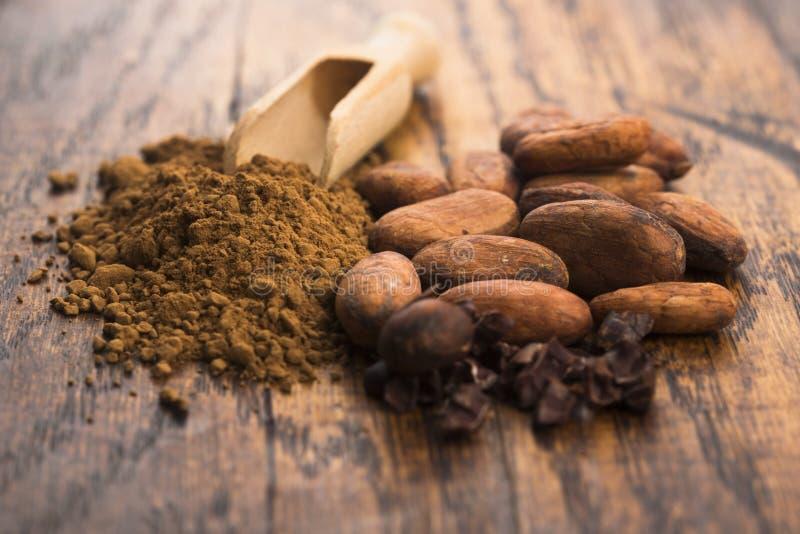 Фасоли какао и порошок какао в ложке стоковое фото rf