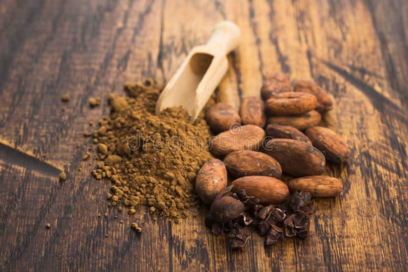 Фасоли какао и порошок какао в ложке стоковые изображения