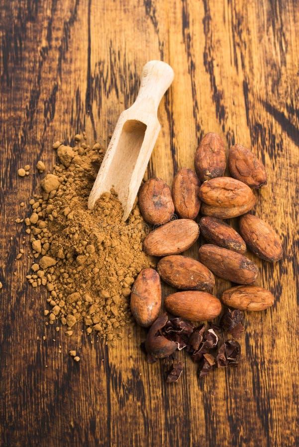 Фасоли какао и порошок какао в ложке стоковое изображение