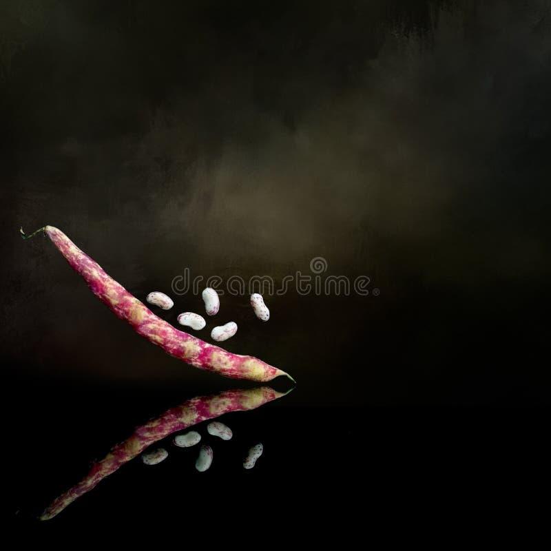 Фасоли Borlotti на черноте с темной предпосылкой стоковое фото rf