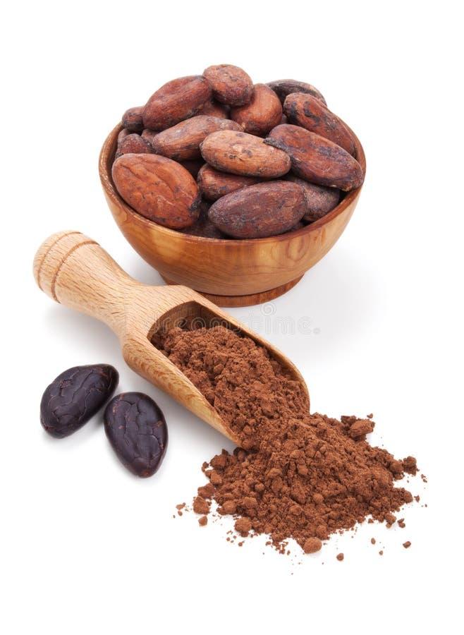 Фасоли Cacao и порошок cacao на белизне стоковое изображение rf