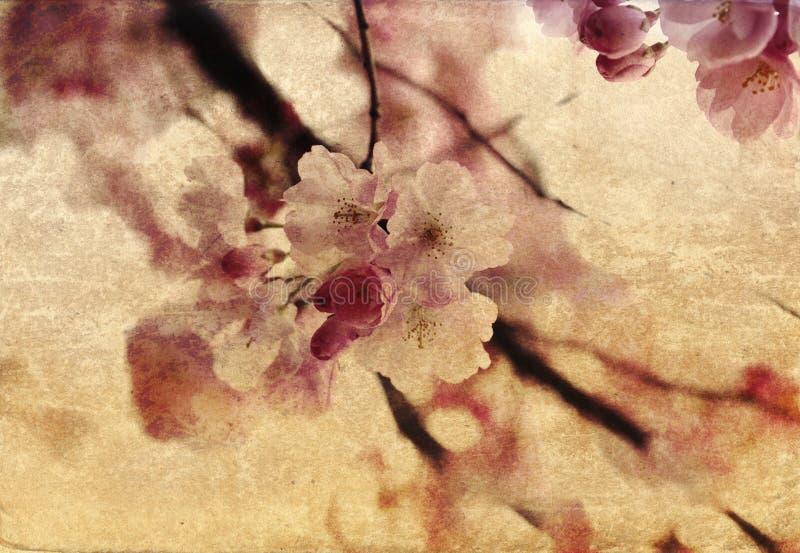 фасонируемый цветок старый иллюстрация штока