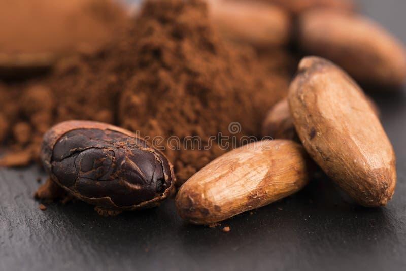 Фасоли какао и порошок какао в ложке стоковые фото