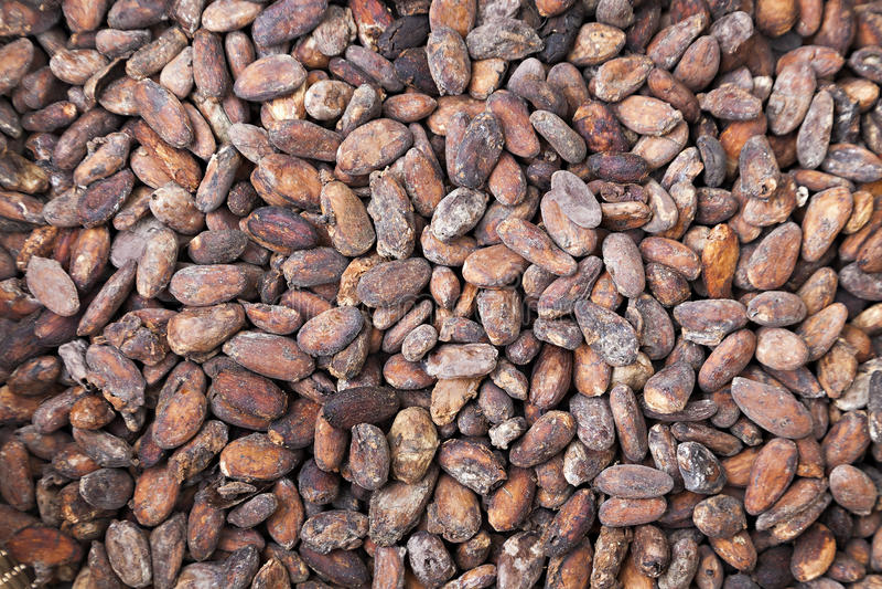 Фасоли какао стоковые фото