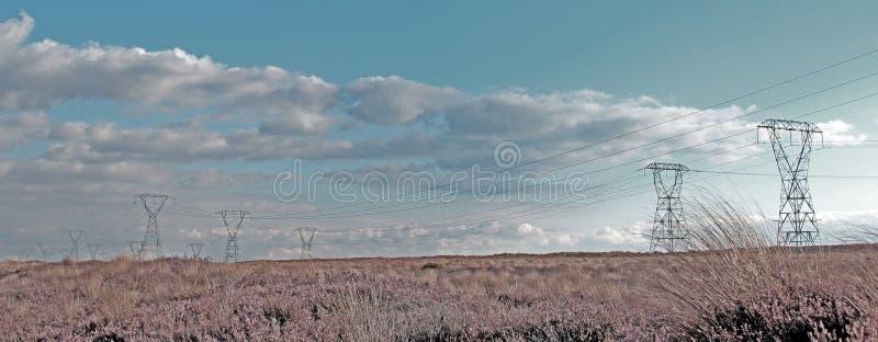 фасоли предпосылки закрывают изолированный росток силы природы вверх по белизне стоковое фото