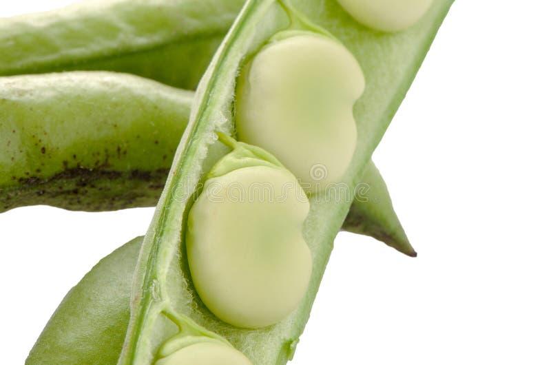 Download фасоли свежие стоковое фото. изображение насчитывающей vegetarian - 40584882