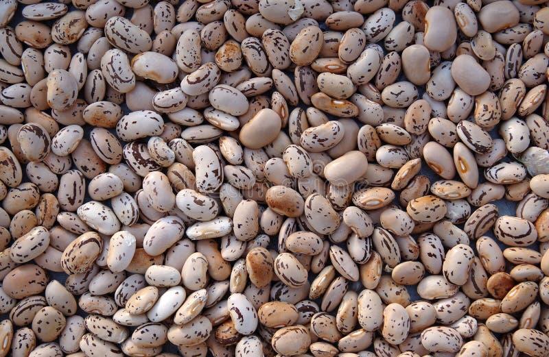 Download Фасоли стоковое фото. изображение насчитывающей семена - 33726430