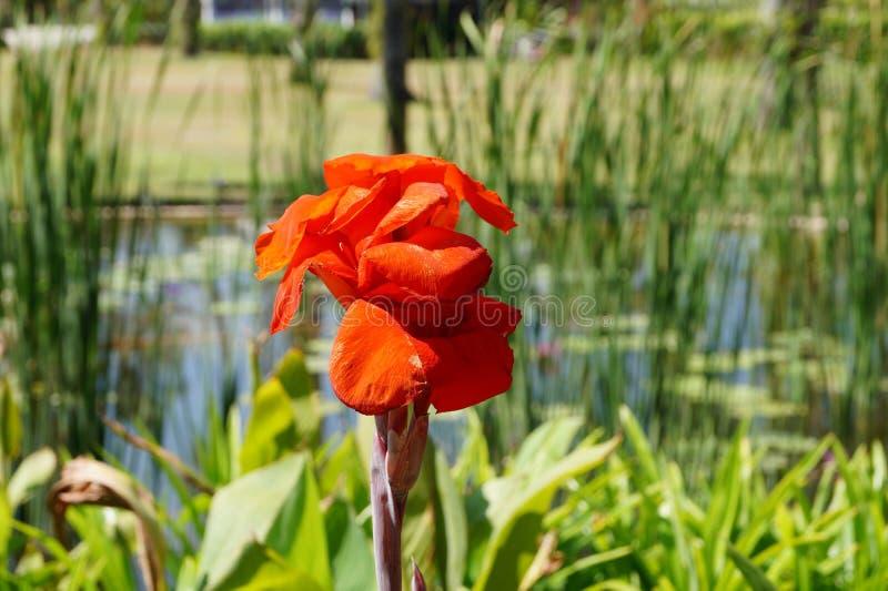 Фауна Мальдивов, как раз красивый цветок стоковые фото