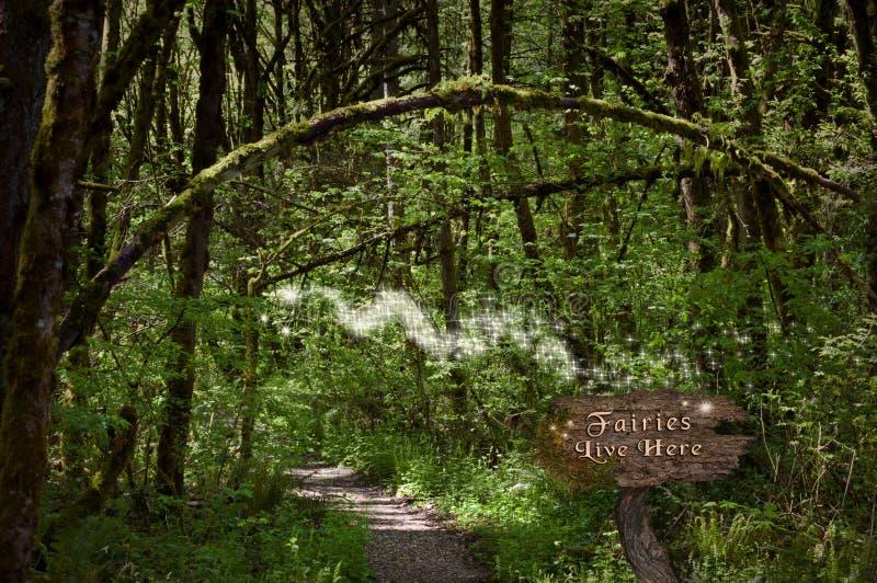 Феи в лесе на волшебном пути стоковые изображения