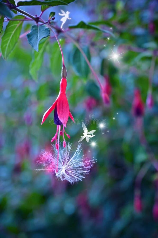Феи в сумерках в волшебном саду фуксии цветов стоковые изображения rf