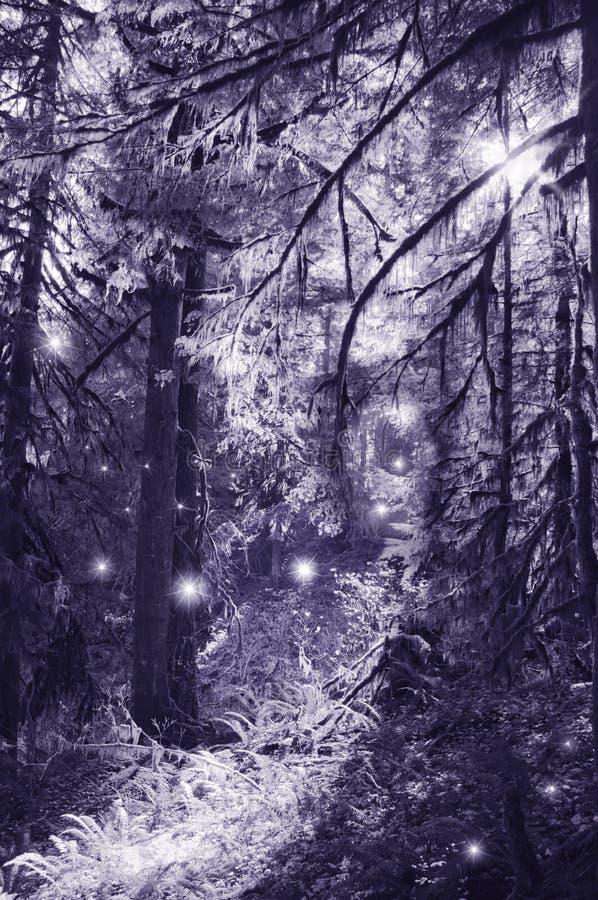 Феи в танцах лунного света в волшебном лесе стоковая фотография