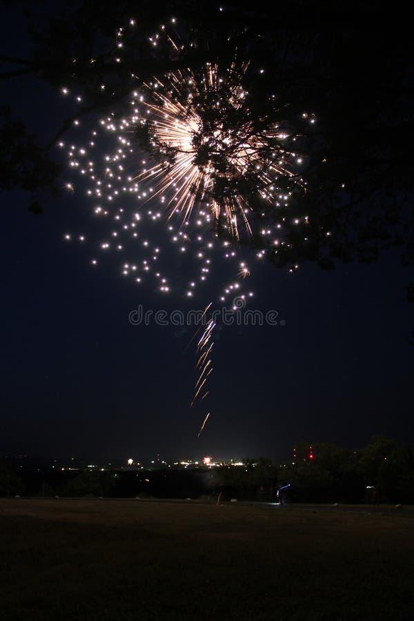 Фейерверк с силуэтом дерева в переднем плане стоковое фото rf