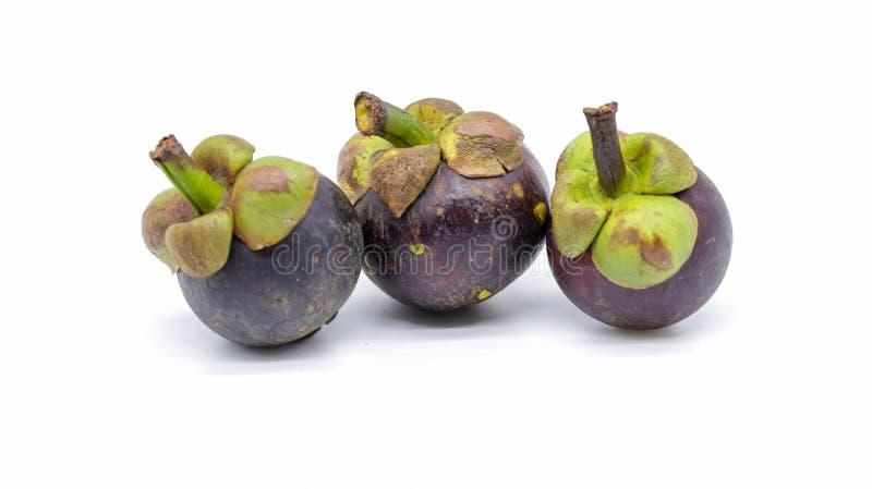 Ферзь плодоовощ мангустан найденный в Таиланде стоковые фотографии rf