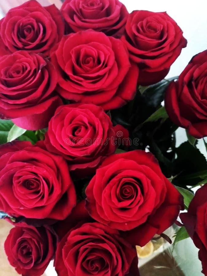 Ферзь цветков стоковые изображения rf