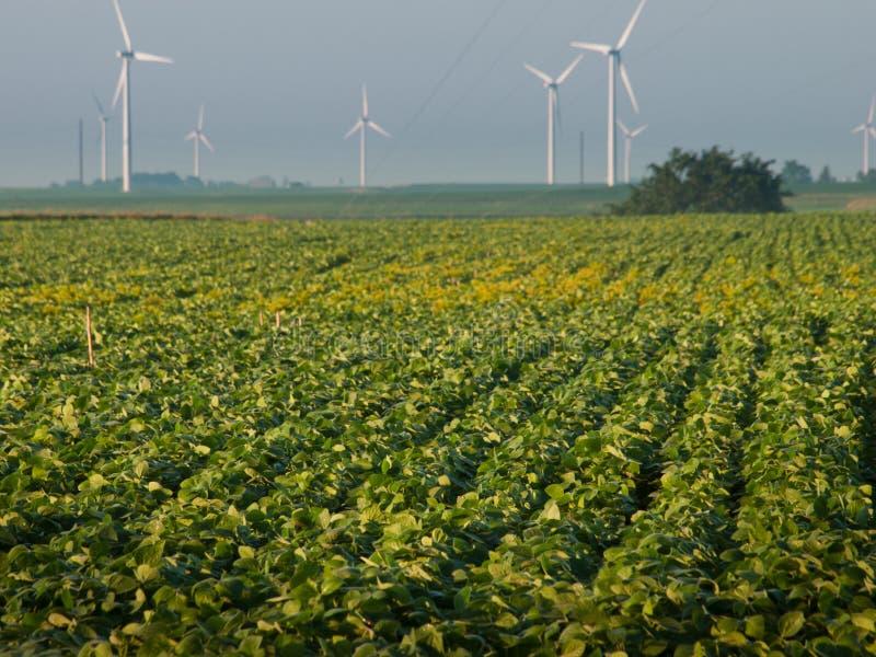 Ферма ветротурбин стоковые изображения