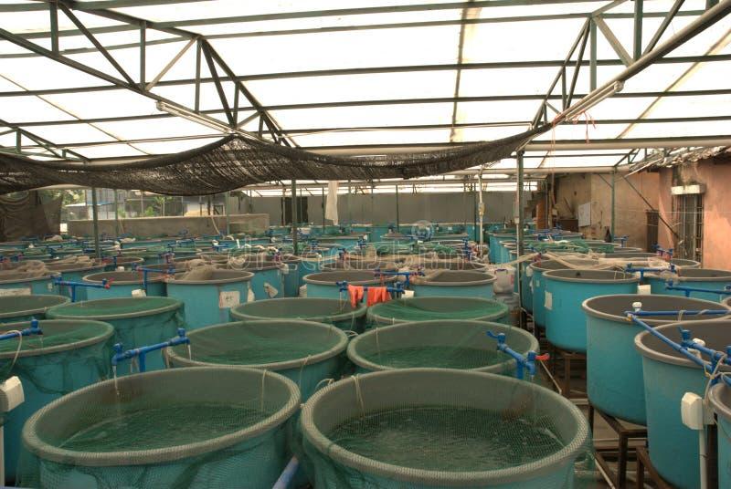 ферма водохозяйства земледелия стоковые фотографии rf