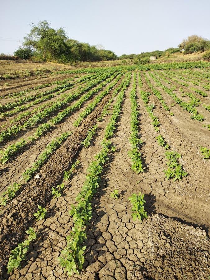 Ферма в индийской деревне стоковое фото rf