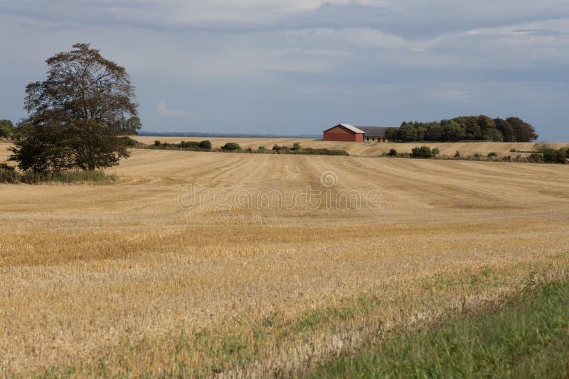 Ферма в поле зерна стоковое изображение rf