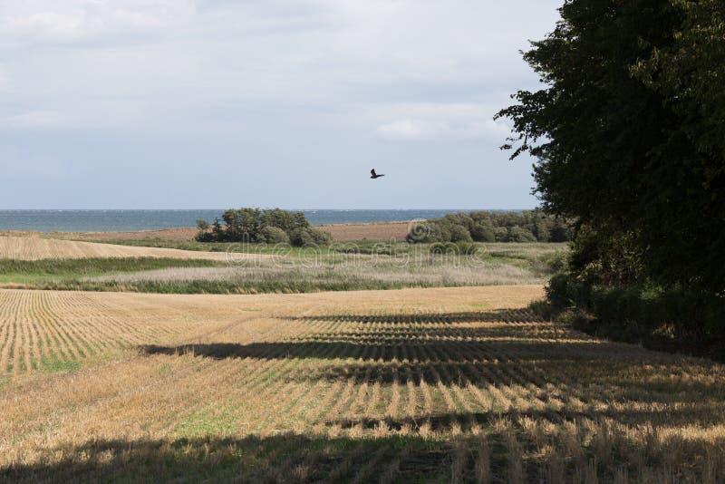 Ферма в поле зерна стоковая фотография rf