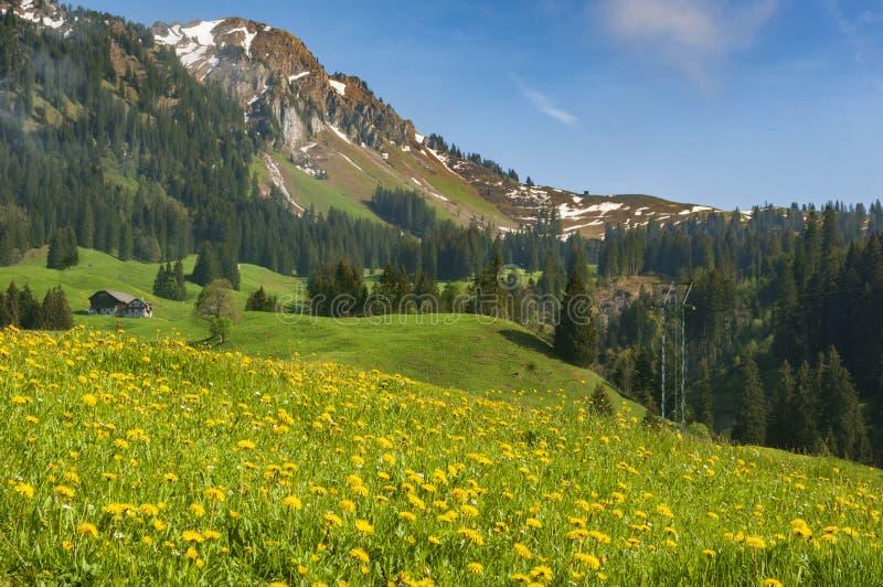 Ферма в швейцарских горных вершинах стоковая фотография rf