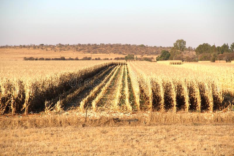 Ферма в Potchefstroom, Южной Африке стоковое фото rf