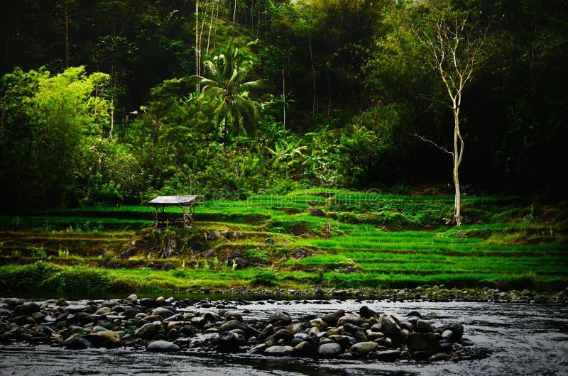 Ферма Индонезии стоковые изображения rf