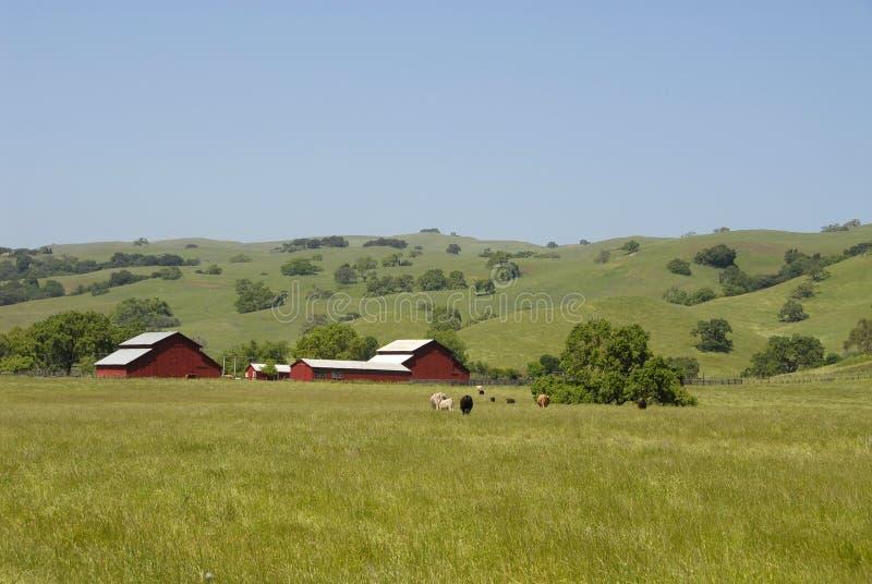 ферма коров стоковые изображения