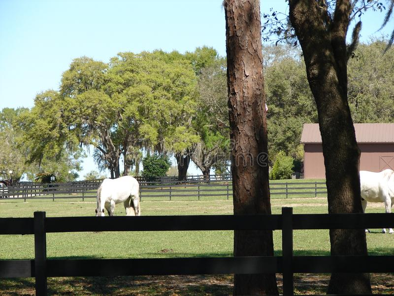 Ферма лошади Флориды стоковая фотография rf