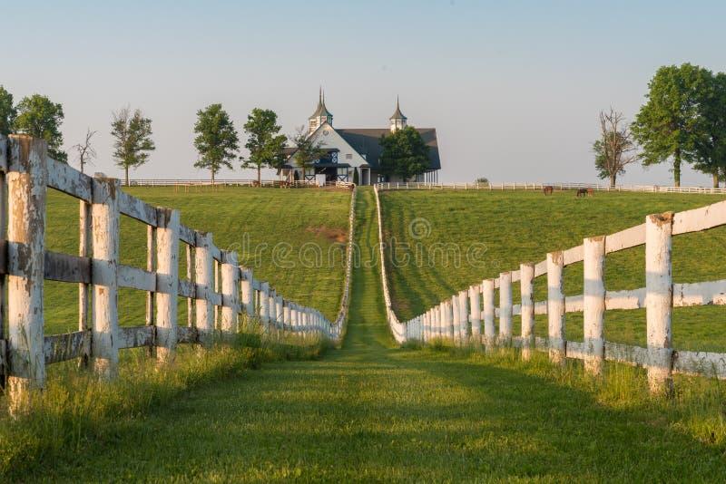 Ферма Манчестера в Lexington Кентукки на восходе солнца стоковые фото