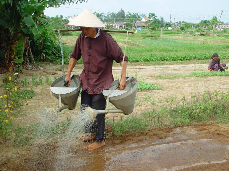 Ферма овоща Tra Que стоковая фотография