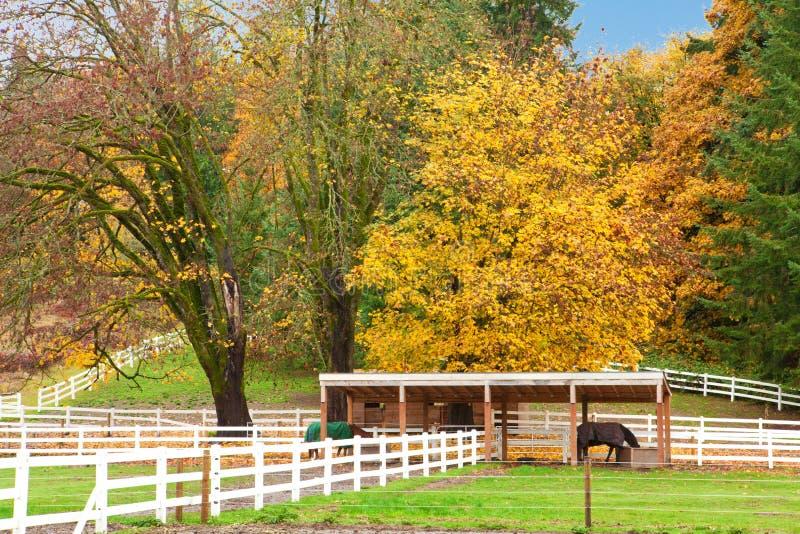 Download Ферма лошади с белой загородкой и листьями падения цветастыми. Стоковое Изображение - изображение насчитывающей американская, трава: 33736239