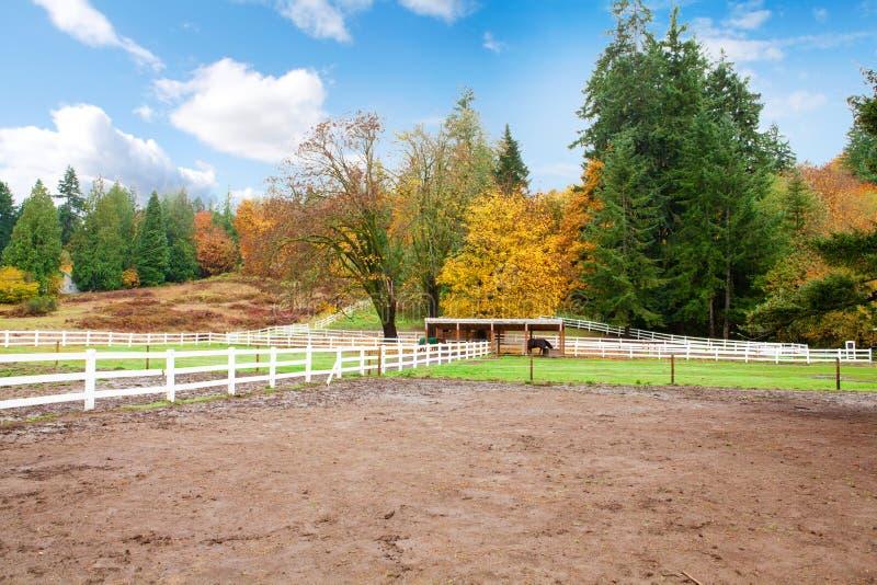 Download Ферма лошади с белой загородкой и листьями падения цветастыми. Стоковое Фото - изображение насчитывающей страна, лошадь: 33736254