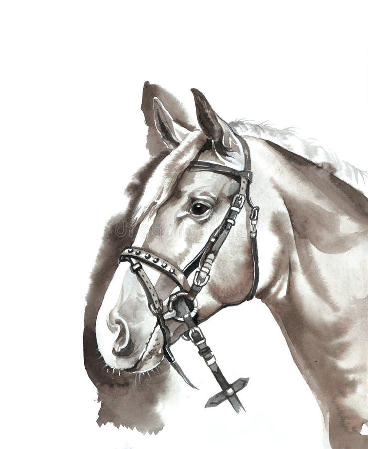 Ферма лошади Head стоковое изображение rf