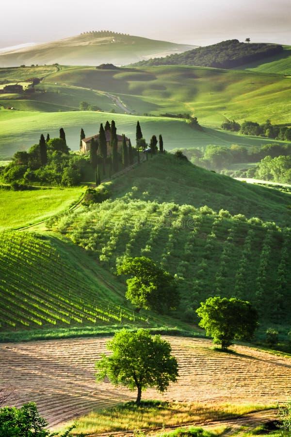 Ферма оливковых рощ и виноградников стоковое фото