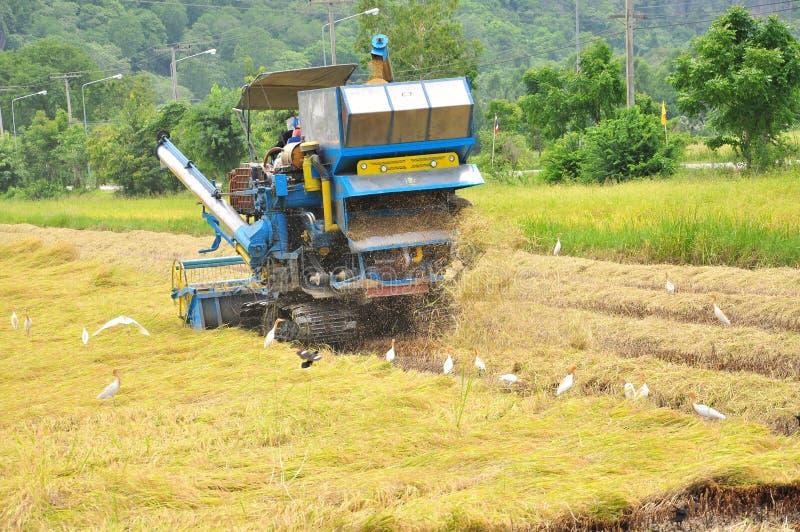 ферма работника риса стоковые фотографии rf