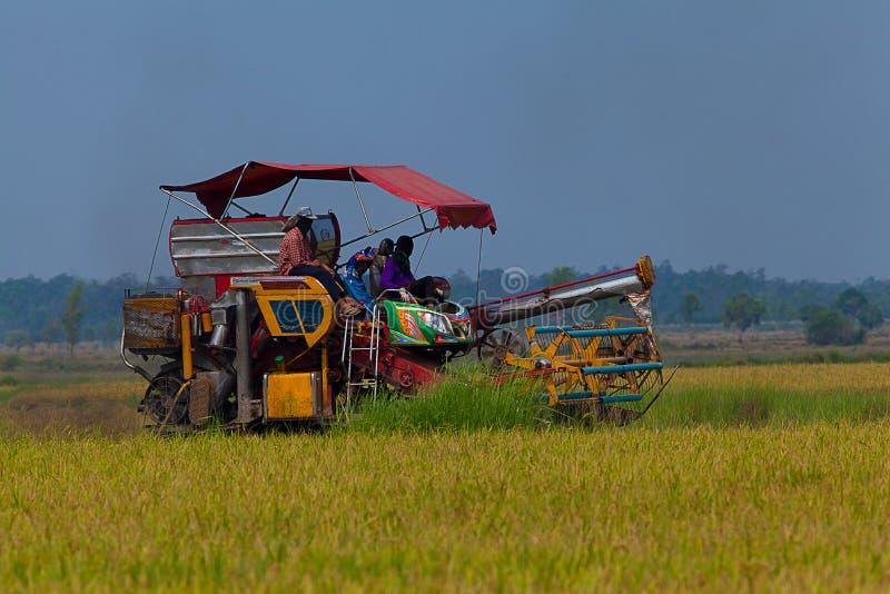 ферма работника риса стоковая фотография