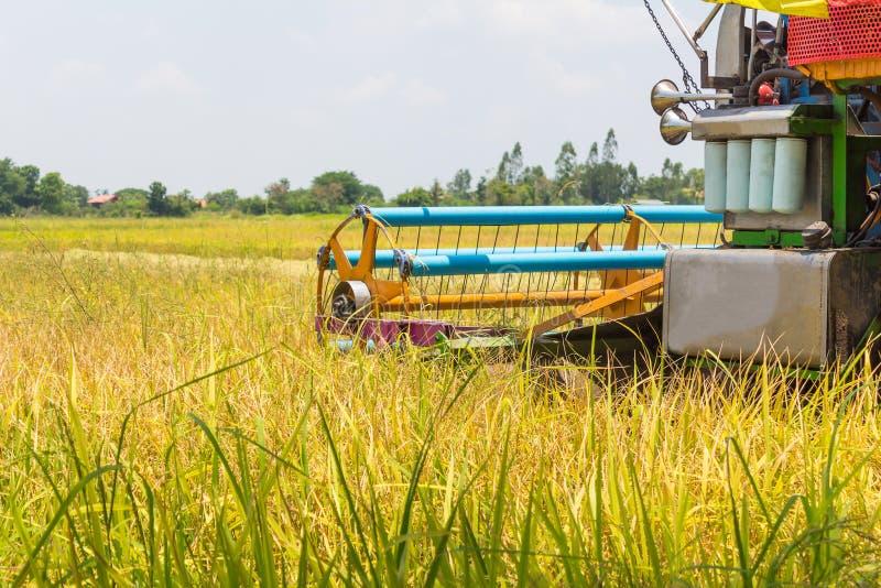ферма работника риса стоковые изображения