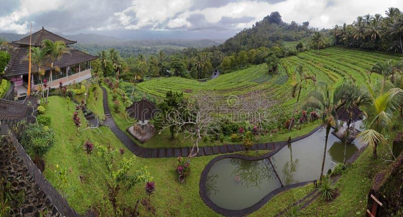 Ферма террасы в Бали стоковые изображения rf