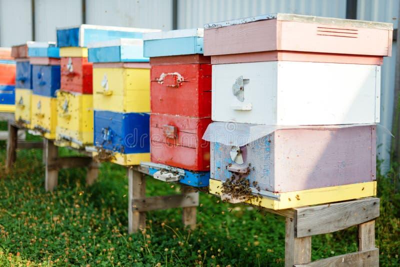 Ферма ульев Пасека, строка пчелы hives в поле стоковые фото
