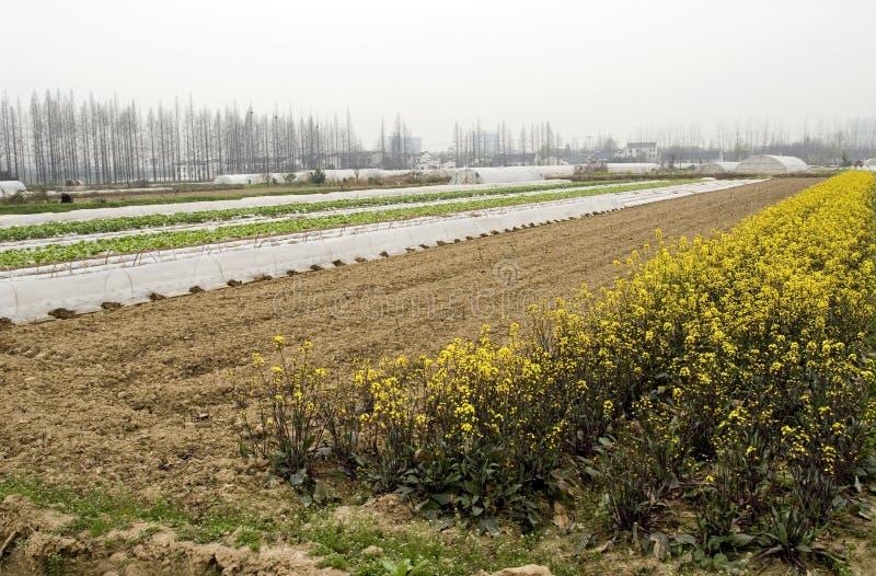 ферма фарфора стоковое фото