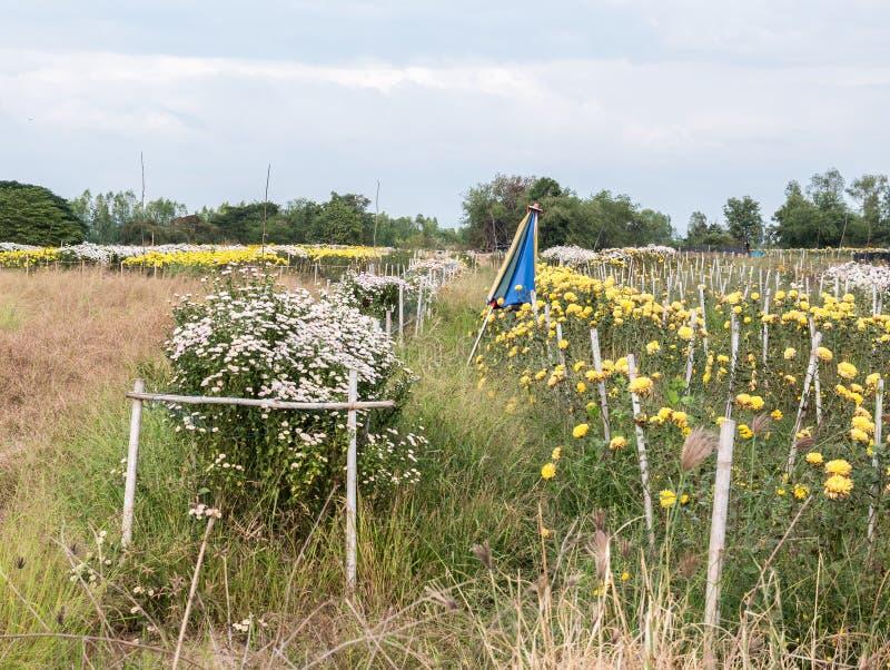 Ферма цветка сельской местности стоковые фотографии rf