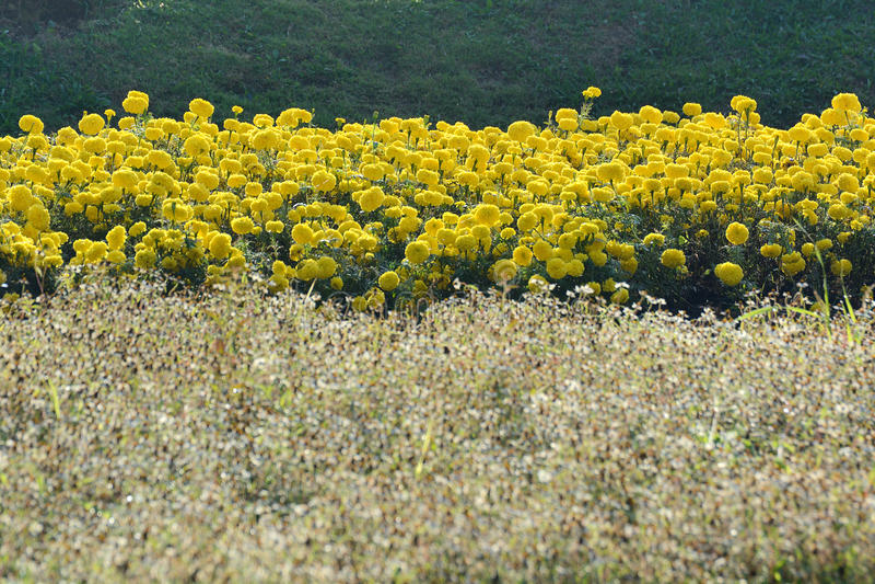 Ферма цветка стоковая фотография rf