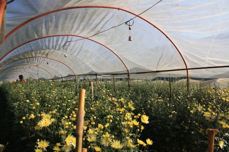 Ферма цветка стоковые изображения rf