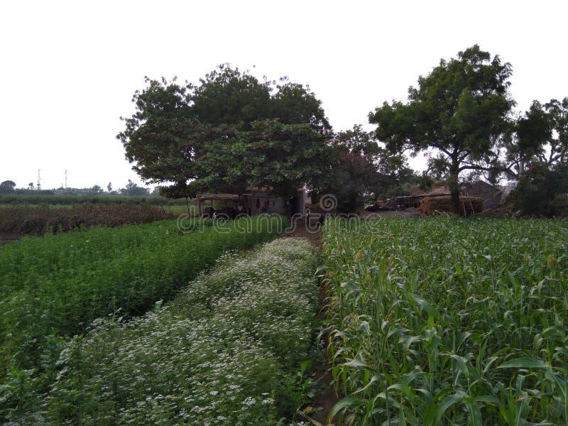 Ферма стоковые фото