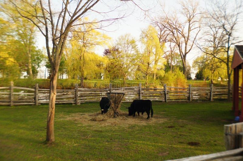 Ферма стоковое изображение rf