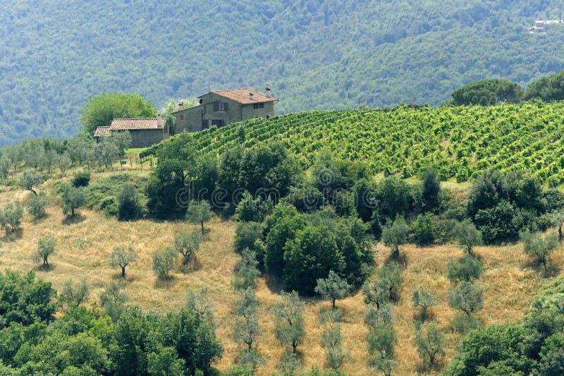 ферма artimino около Тосканы стоковое изображение rf
